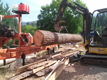 Large trees give lots of great lumber