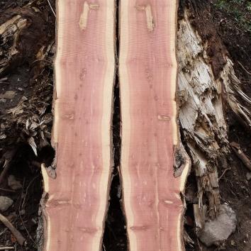 Red Heart Cedar